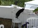 4th September  - Donna e Loren - wedding in Poppi - the cat